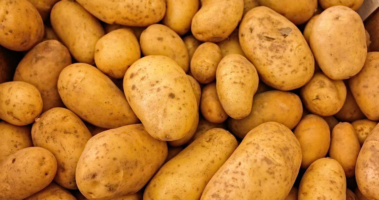 Pour percer le secret des frites belges, le choix de la pomme de terre est essentiel.